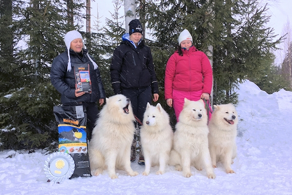 Anni Siermala's winning team in sled dog race, Kauhajoki 2016.