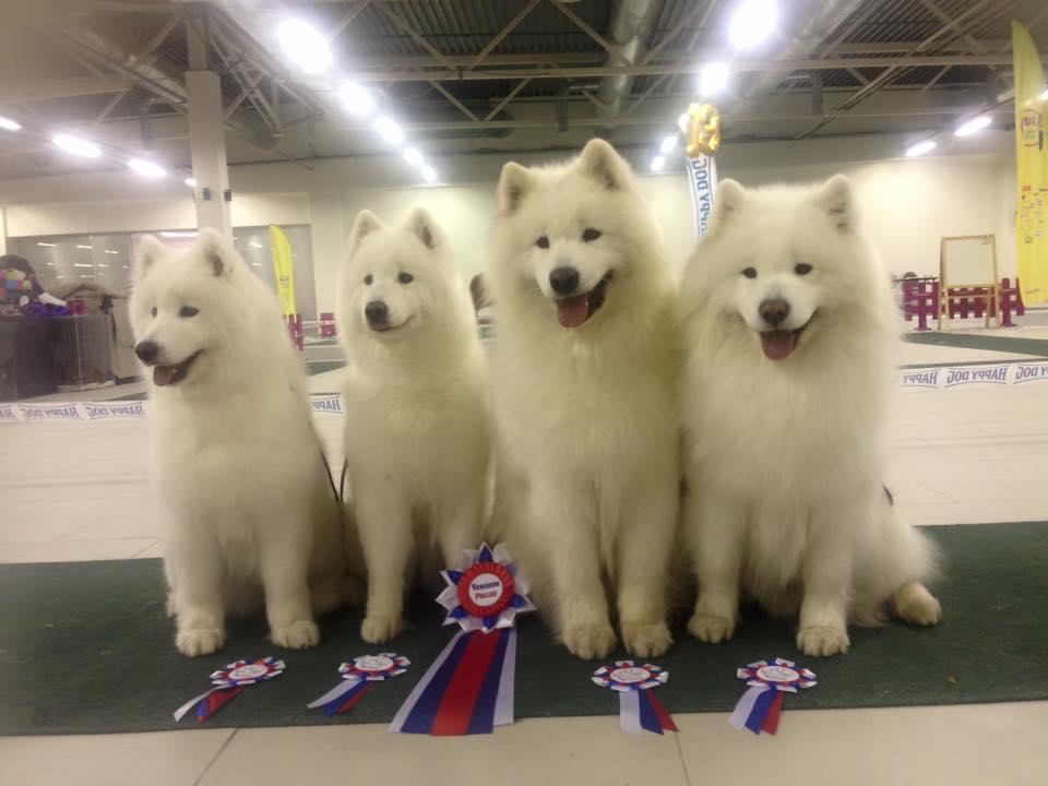 New Russian Champions Saima, Salli, Vili and Masi