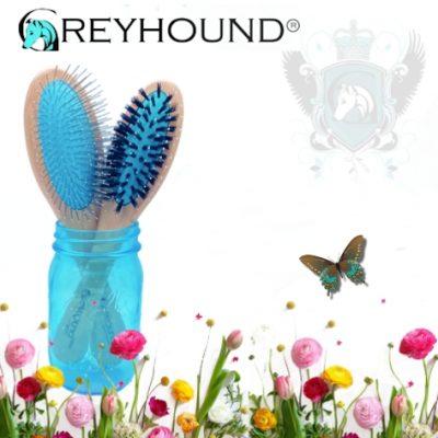 Greyhound harjat